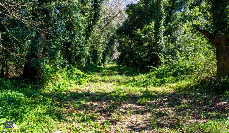 A09 Terreno urbano Arcozelo