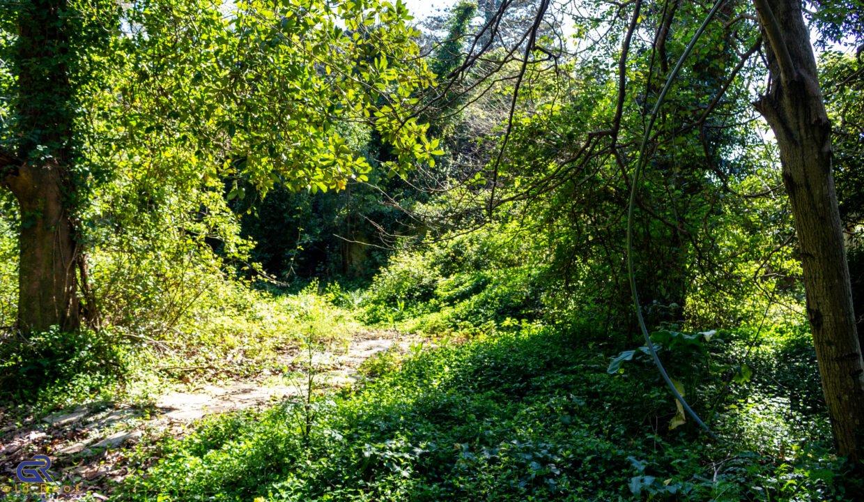 B01 Terreno urbano Arcozelo